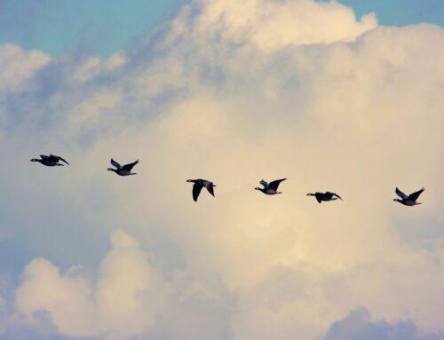 CÓMO ADAPTARSE A VIVIR EN OTRO PAÍS: CLAVES PARA MANEJARLO